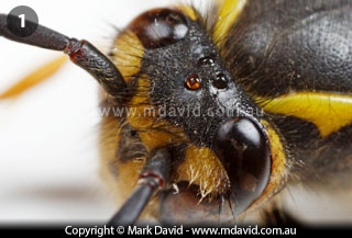 Mark David | How many eyes does an insect have?
