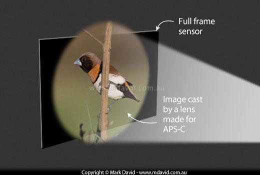 Mark David | APS-C vs full frame